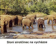 Sloni 2